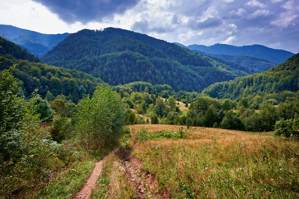 Landscape with a hiking footpath in the forest